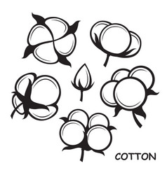 cotton plant set vector image