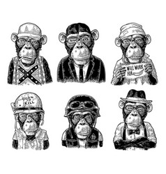 monkey in human clothes redneck businessman vector image