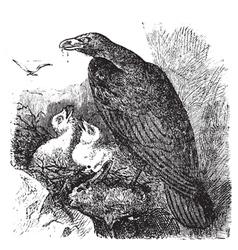 Golden eagle vintage engraving vector image vector image