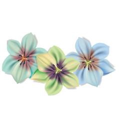 Beautiful bouquet of flowers summer flowers vector