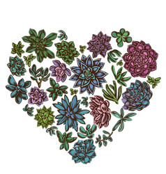 heart floral design with colored succulent vector image