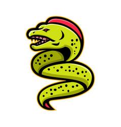 Moray eel sports mascot vector
