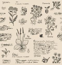 Seamless pattern on theme herbal medicine vector