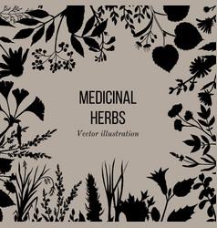 vintage collection hand drawn medicinal herbs vector image