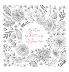 Hand drawn floral collection vector image