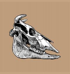 bull skull vector image