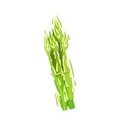 Bunch ripe asparagus on vector