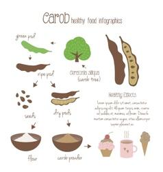 Carob infographics vector image
