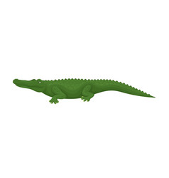 crocodile predatory amphibian animal side view vector image