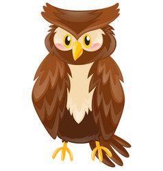Cute owl with brown feather vector