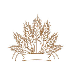 Gold ripe wheat ears icon vector