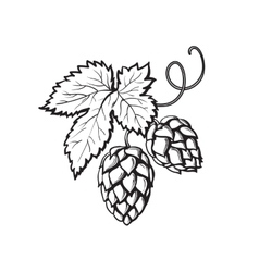 Green hop plant sketch style vector image