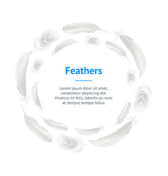 realistic detailed 3d white bird feathers banner vector image