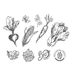vegetables and round icon organic food vector image