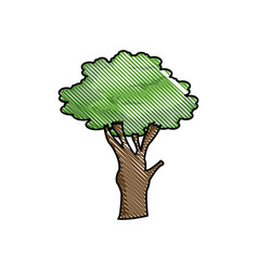 drawing tree foliage natural ecological image vector image