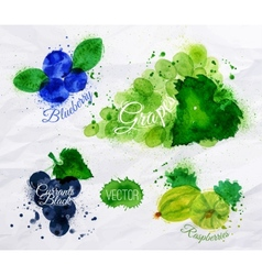 Fruit watercolor blueberry grapes currants black vector image vector image