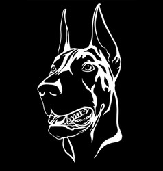 Doberman portrait with a red collar vector