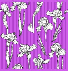 iris violet pattern vector image