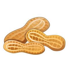 Peanut in shell icon cartoon style vector