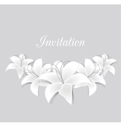 White lilies vector
