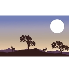 Antelope and full moon landscape silhouette vector image vector image