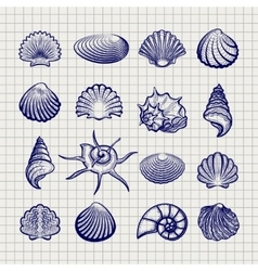Ball pen sketch sea shells vector