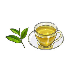 glass cup saucer and fresh green tea leaf vector image vector image