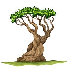 A bristlecone pine tree vector