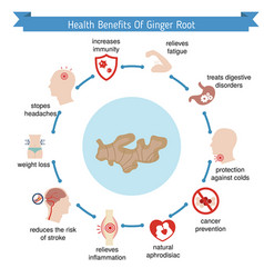 foods infographics ginger root foods vector image