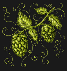 Hand drawn hops plant isolated on vector