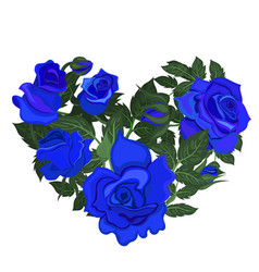 heart blue roses isolated on a white vector image