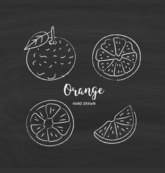 orange fruit drawing orange slices sketch of vector image