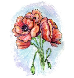 Poppy flowers sketch02 vector