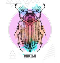 realistic hand drawing june beetle vector image