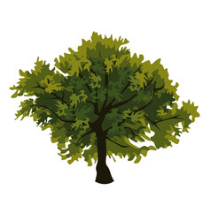 Tree oak clip art vector