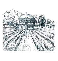 vineyard hand sketch of vector image