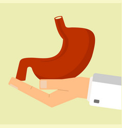doctor hand holding human stomach healthcare vector image vector image
