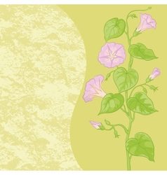 Flowers Ipomoea and abstract pattern vector