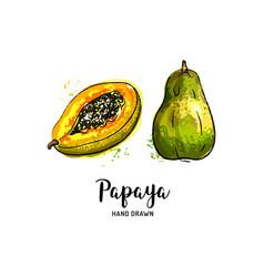 Papaya fruit drawing pawpaw slice vector