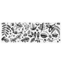 Autumn botanical set collection hand sketched vector