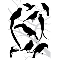 silhouettes of tropical birds vector image vector image