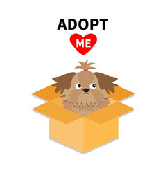 Adopt me dont buy shih tzu dog inside opened vector