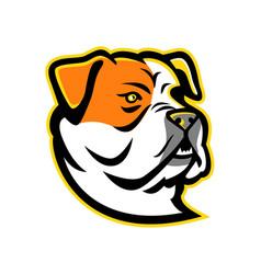 american bulldog mascot vector image