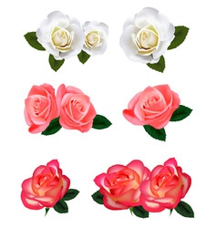 big group of white and red roses vector image