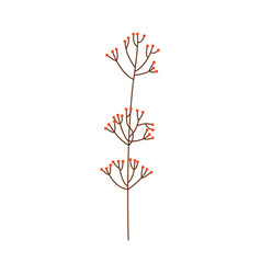 branch of red berries or leaves isolated on white vector image