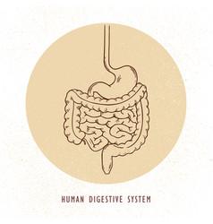 Human hand-drawn digestive system vector