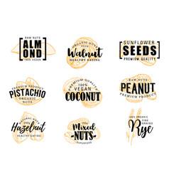 nuts almond coconut peanut hazelnut vector image
