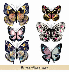 Set of realistic colorful butterflies for design vector