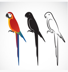 parrot macaws on white background wild vector image