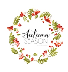 Autumn Rowan Berry Background Floral Banner Design vector